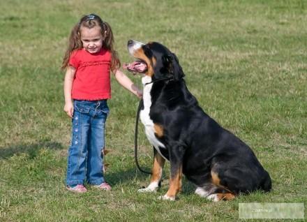 Duży Szwajcarski Pies