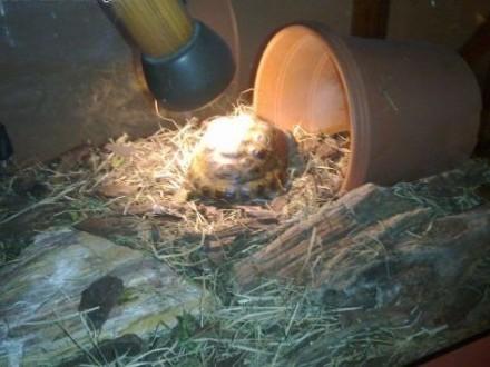 terrarium +żółw   dolnośląskie Bierutów