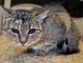 Wyjątkowa kotka Lutka szuka domu