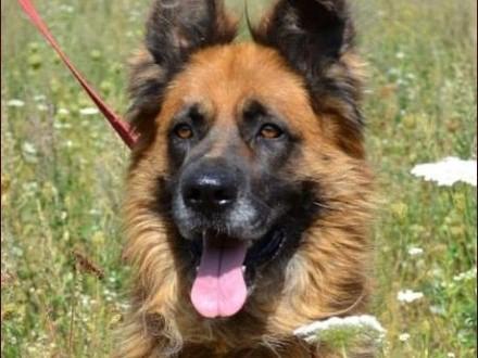 Prawdziwy Frykas wśród psów! :)