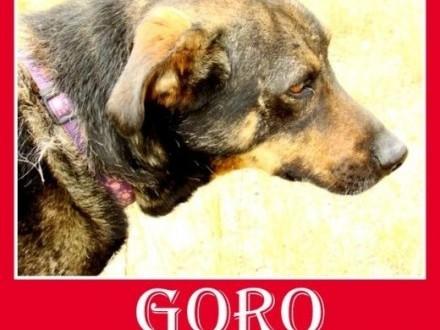 Średni przyjazny łagodny kontaktowy pies GOROAdopcja   dolnośląskie Wrocław