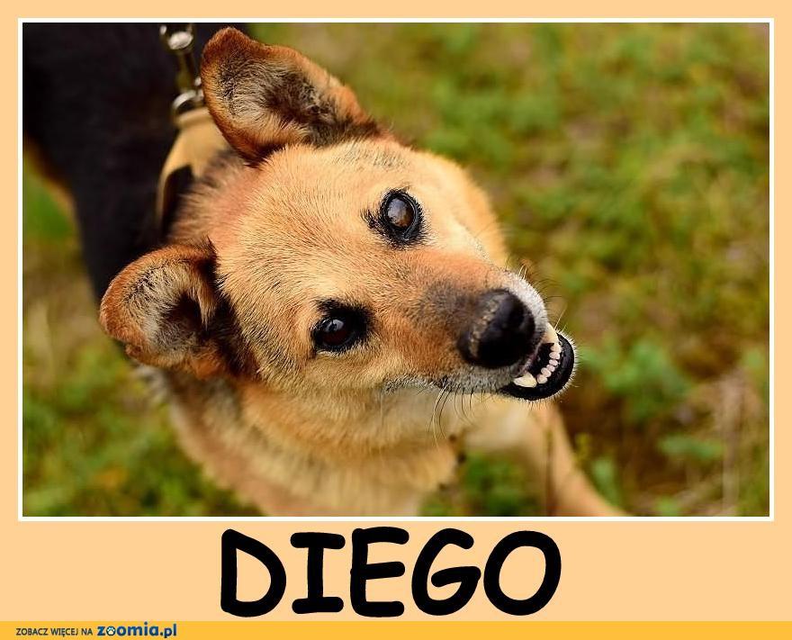 Średni, sympatyczny, przyjacielski, grzeczny piesek DIEGO_Adopcja_