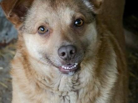 MIODEK - wesoły  rezolutny  zakochany w człowieku psiak czeka na swoją szansę