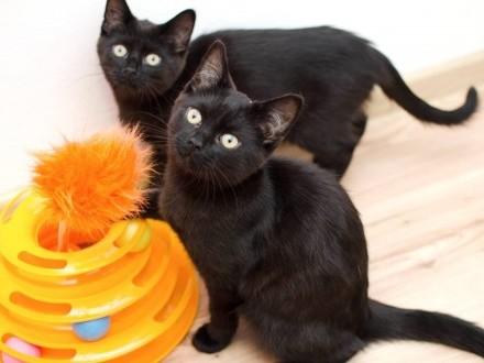 KOT: Marlenka i Rico z Fundacji Miasto Kotów - czarne przyniesie szczęście!