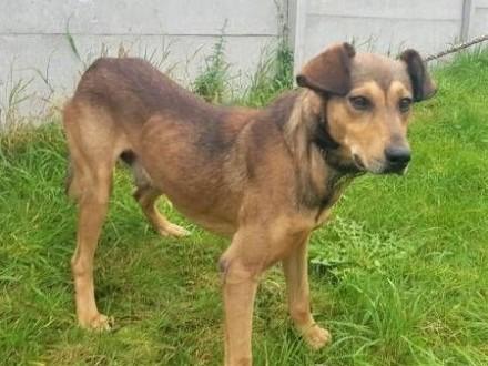 GONIEC - niewielki  młody przerażony schroniskiem psiak szuka domu!   małopolskie Kraków