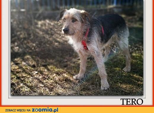 3 lata,15 kg,terier mix,łagodny,wesoły,kontaktowy,szczepiony psiak TERO.Adopcja.,  małopolskie Kraków