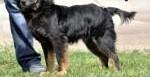 MAJ-mini seter;nieduży  kudłaty  urokliwy pies czeka tęsknie na dom   opolskie Opole