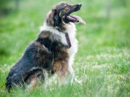 Agat  młody  wesoły psiak szuka kochającego domu!
