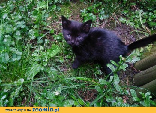 oddam kota w dobre rece,  śląskie Bielsko-Biała