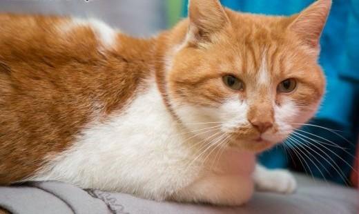 Stefan  koci indywidualista szuka domu!   Koty pospolite cała Polska