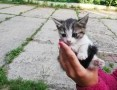 'oddam kota w dobre rece,  śląskie Bielsko-Biała