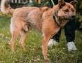 RUDZIK - kochany, spragniony miłości psiak, szuka domu!,  mazowieckie Warszawa