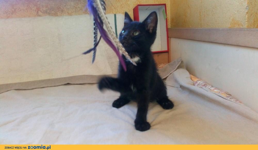 Mały kociak Jacek szuka domu