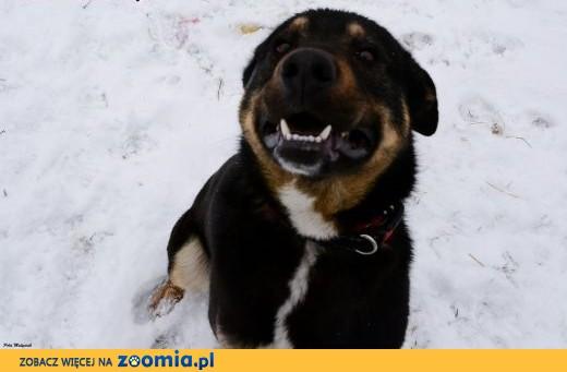 pies-Maciek,  śląskie Częstochowa