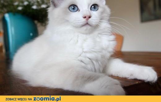 urocza koteczka,  dolnośląskie Wrocław