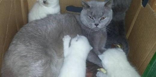 oddam kociaki   lubelskie Zamość