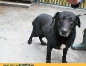 Arni - młody, śliczny psiak szuka domu