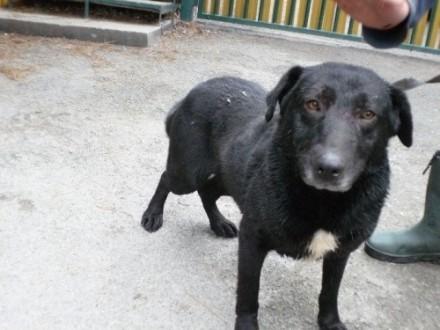 Arni - młody  śliczny psiak szuka domu