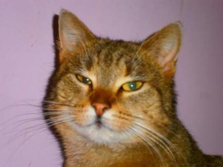 Finka  wzorowa koteczka szuka domu!