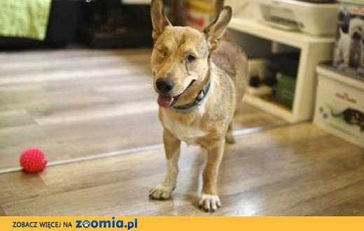 BAŚCIK - wdzięku moc, zimny nos - super psa pokocha KTOŚ?,  małopolskie Kraków