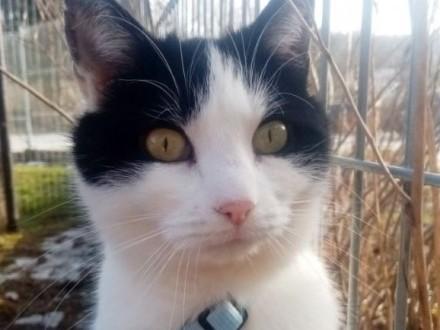 Halinka  kotka z działek  chciałaby wrócić do domu