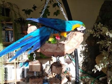 Huśtawki naturalne dla duzych papug