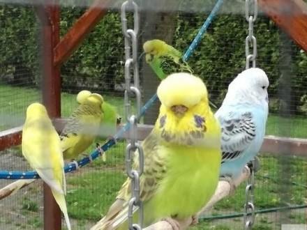 papugi WP