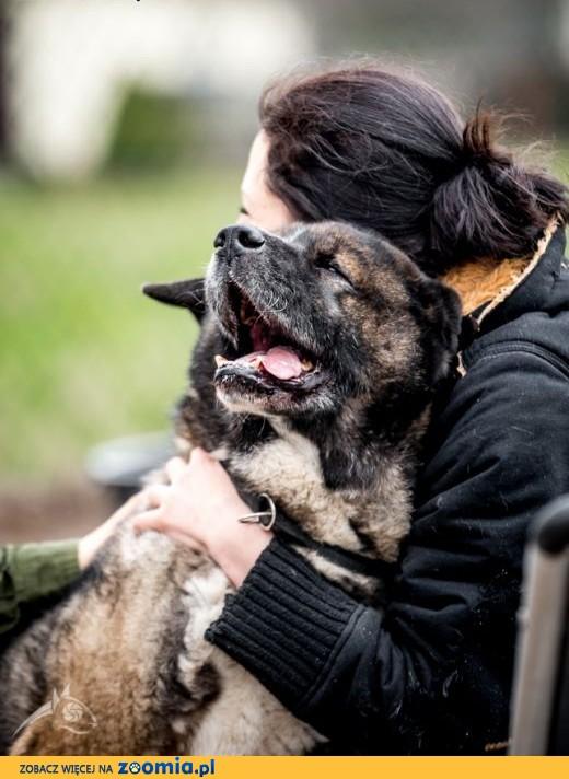 APE - starsze psy też pragną być kochane !,  śląskie Gliwice