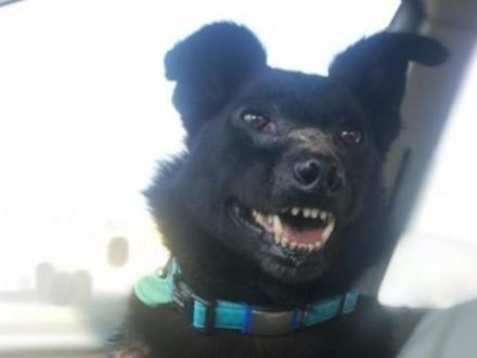 Cudowny pies Kostek szuka domu
