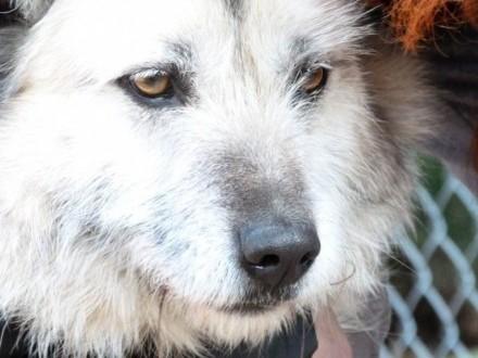 Kudłaty Iwan  wesoły psiak szuka domu!