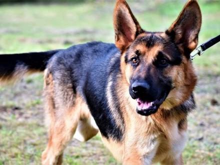 Dżeki  roczny OWCZAREK  wesoły  przyjazny psiak do adopcji!