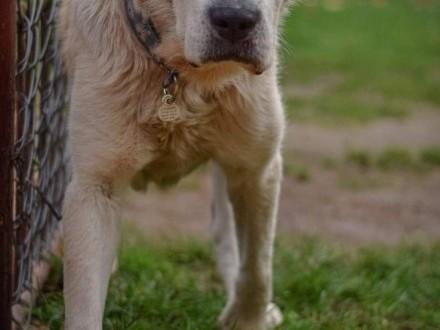 Boris to pies co idealnym kompanem jest!