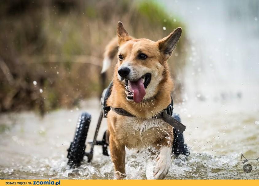 TOFFIK – na wózeczku świat poznaje i szczęście rozdaje:)