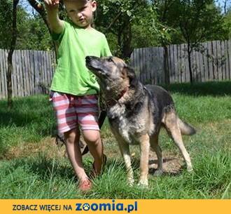 Idealna sunia mix owczarek LIMBA mądra, zrównoważona przyjaciółka całej rodziny!,  mazowieckie Warszawa