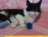 Pola, młoda koteczka do adopcji!