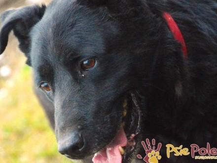 PAN KOKOS-piękny  dorodny  bardzo miły i przyjazny psiak szuka domu  adopcja