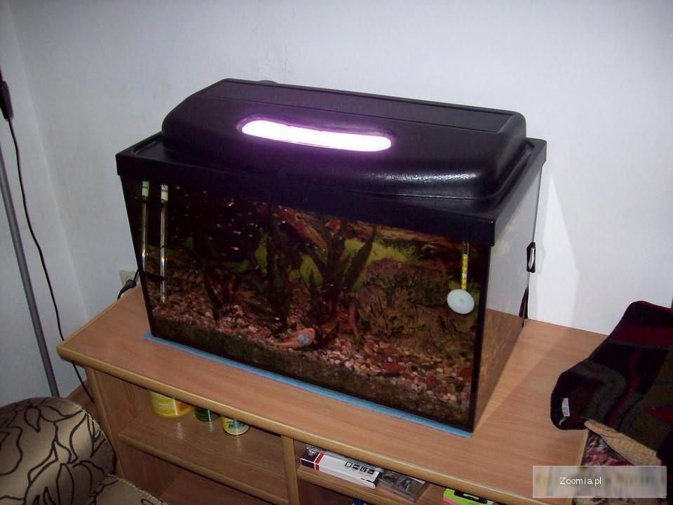 Akwarium 60l. + roślinki, filtr wewnętrzny, rybki - zestaw.