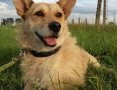 Januszek-mały, silny pies rozgląda się za domem!:),  dolnośląskie Jelenia Góra