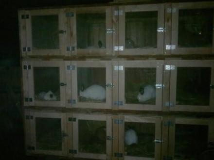 solidne klatki dla królików