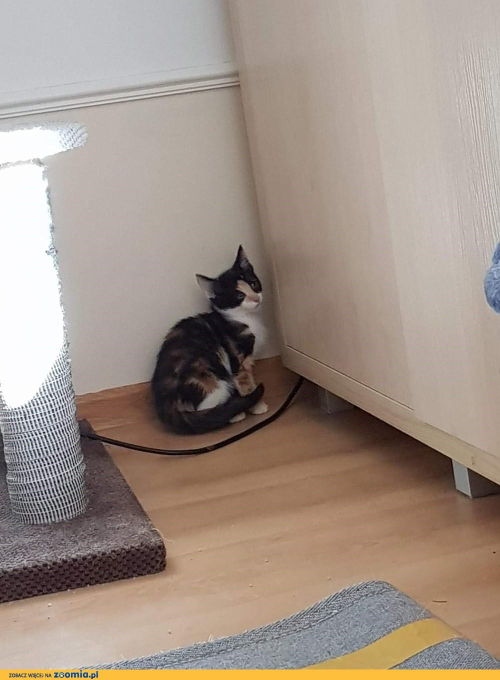 Koteczka Dimka szuka domu