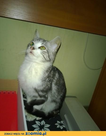 Maleńkie kocięta szukają nowych domów!