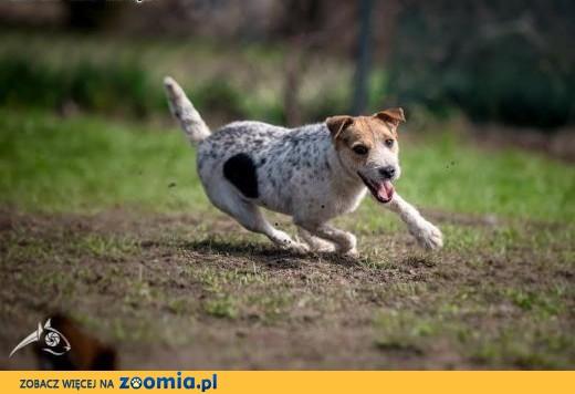 ZYZIA - swojego przyjaciela wyrwie z fotela :D ,  mazowieckie Warszawa
