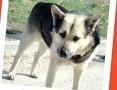 Sympatyczny średni pies POWO, spokojny,łagodny,przyjazny_Adopcja