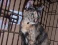 Roczna kotka Cher szuka domu
