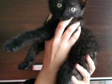 DIPSI -  zabawowa 3 miesięczna kotka szuka nowego domu!   wielkopolskie Poznań