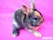 Urocze króliczki miniaturowe