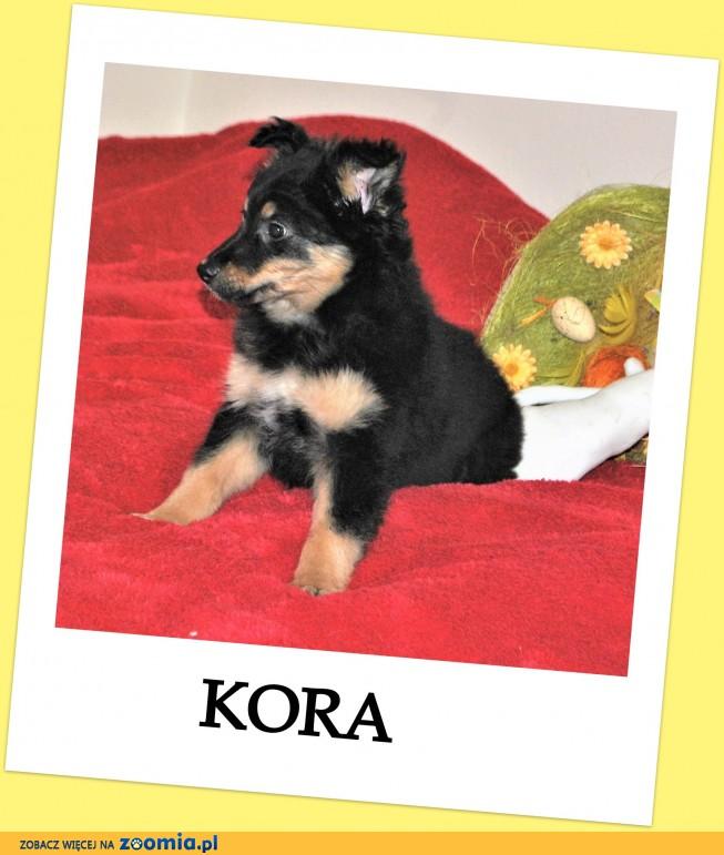 3 miesięczna,zaszczepiona,śliczna,wesoła,kontaktowa sunia KORA_Adopcja_