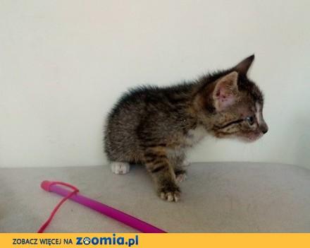Kociak Drops szuka domu