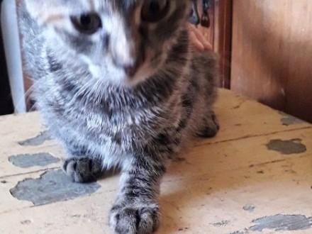 Mam do oddania koty Mają cztery miesiące Kotka kolor szary rabyKocur czarny