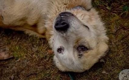 Boris to pies  miłości pragnący zwierz!